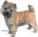 cairn terrier 05.jpg