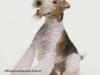 fox terrier 03.jpg