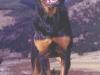 rottweiler 02.jpg