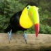 th_1232210030_toucan-wallpapers120841024x768