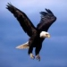 th_1256558617_flying-eagle-wallpaper
