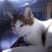 thumbs fotos de gatos triki 2 El baño de su Gato, precauciones