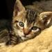 thumbs fotosdegatos1 El baño de su Gato, precauciones