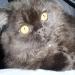 thumbs ramon El baño de su Gato, precauciones