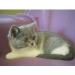 thumbs trastolillos4 El baño de su Gato, precauciones