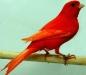 thumbs comunidad 1198223617 Como es el comportamiento de los canarios