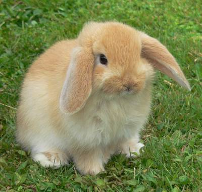 external image conejos.jpg