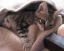 cuidar-gato-enfermo