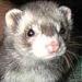 thumbs is El Huron, una de las mascotas con mas exito