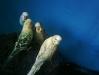 thumbs 100 0607 Como cuidar los Pericos Australianos