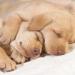 th_1232103052_cachorro