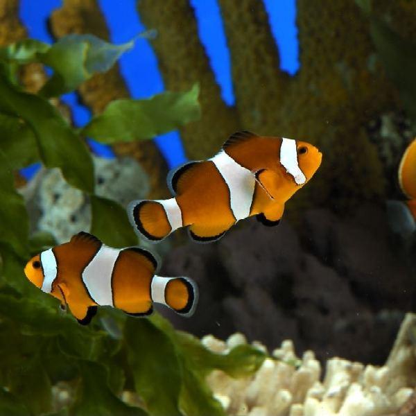 fotos de peces acuarios fotos de peces imagenes auto