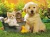 thumbs 8 fotos perros gatos g Parasitos !! la amenaza de nuestras mascotas