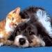 thumbs foto perro gato p Parasitos !! la amenaza de nuestras mascotas