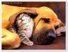 thumbs foto perrosygatos 450x343 Parasitos !! la amenaza de nuestras mascotas