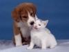 thumbs fotos perros gatos peq Parasitos !! la amenaza de nuestras mascotas