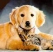 thumbs images Parasitos !! la amenaza de nuestras mascotas