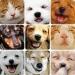 thumbs perros gatos Parasitos !! la amenaza de nuestras mascotas