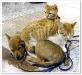 thumbs perros y gatos 09 Parasitos !! la amenaza de nuestras mascotas