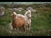 thumbs caballos2 La visiòn de los Caballos