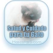 Consejos de Cuidado para tu Gato