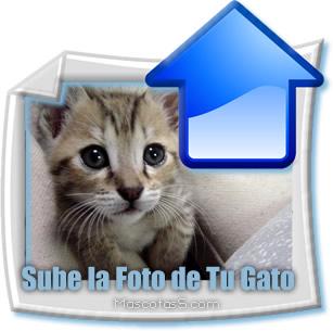 sube la foto de tu gato