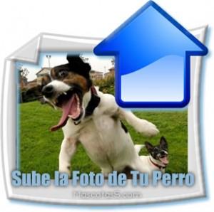 Sube la foto de tu perro