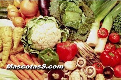 hortalizas41 ¿Como alimentar a tu loro?