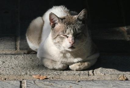 Enfermedades de los gatos 2