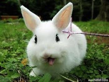 Cuidados básicos para tu conejo