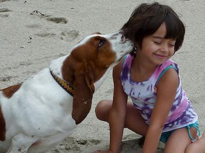 perros para ninos Perros para Niños