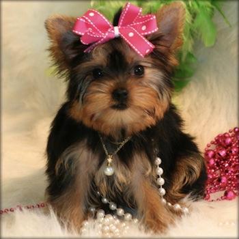 Razas de perros ideales para ninos pequenos Razas de perros ideales para niños pequeños