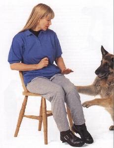 adiestramiento 1 Como educar a un perro adulto