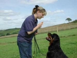entrnamiento perro 300x225 Como educar a un perro adulto