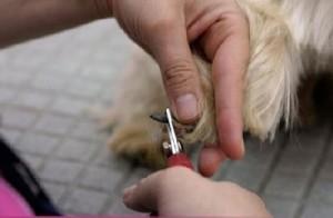 Como cortar las uñas a tu perro