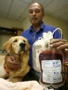 Beneficios que proporciona el examen de sangre en las mascotas