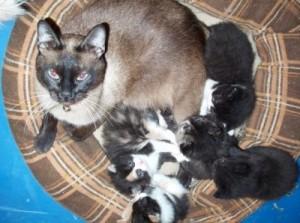 gattito1 300x223 Las primeras semanas de un gatico