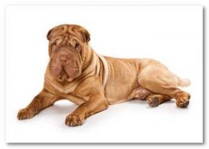 Alimente a su perro con Omega 3
