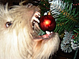 El perro y los adornos de navidad