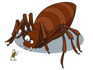 Enfermedades que causan los parasitos externos en las mascotas