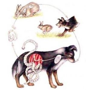 Parasitos internos de las mascotas