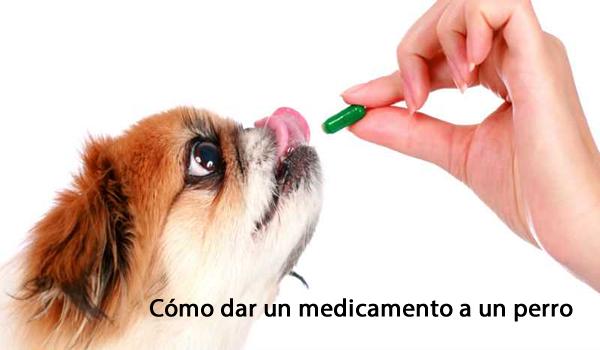 Cómo dar un medicamento a un perro y estar saludable