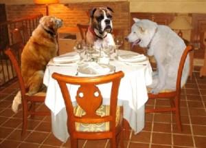 Bow Wow Deli, cafetería para perros