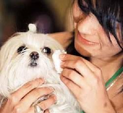 La conjuntivitis canina aumenta con el verano