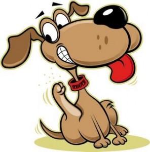 Parasitos externos en mascotas