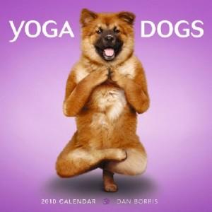 Yoga para perros y dueños