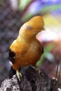 AVE AMARILLA 200x300 Hermosa galeria de aves