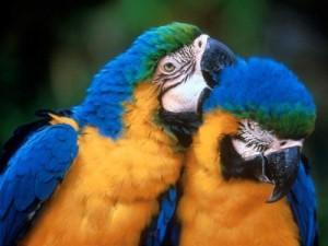 PAPAGAYO 300x225 Hermosa galeria de aves