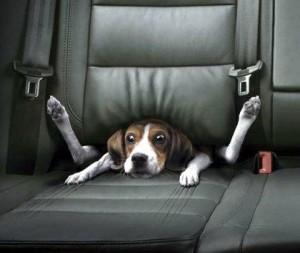 Que hacer para que los perros superen los ruidos fuertes