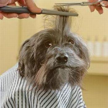 perro en peluqueria Spas caninos